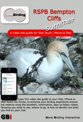 RSPB Bempton Cliffs Summer