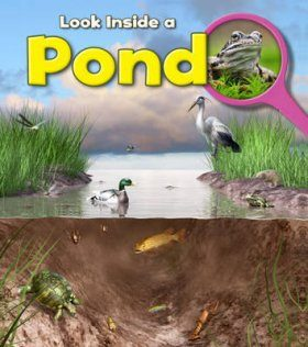 Look Inside A Pond