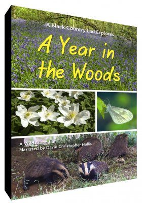 A Year in the Woods (Region B)