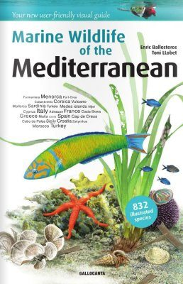 Marine Wildlife of the Mediterranean
