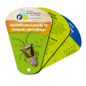 Identification Guide to Ireland's Shieldbugs