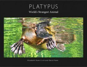 Platypus: World's Strangest Animal