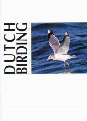 Dutch Birding, Volume 38(1): Identification of the Larus canus Complex