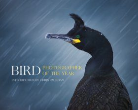 Bird Photographer of the Year