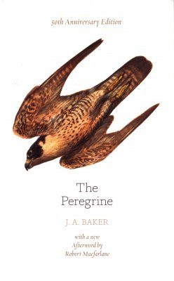 The Peregrine (50th Anniversary Edition)