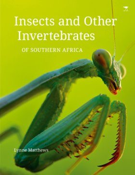 Insects and Other Invertebrates of Southern Africa