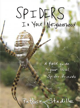 Spiders in Your Neighborhood
