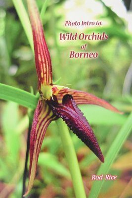 Photo Intro to Wild Orchids of Borneo