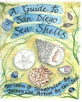 A Guide to San Diego Sea Shells