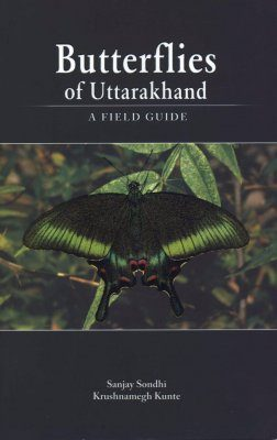 Butterflies of Uttarakhand