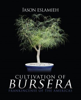 Cultivation of Bursera