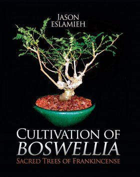 Cultivation of Boswellia