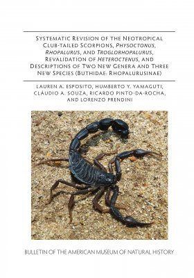 Systematic Revision of the Neotropical Club-Tailed Scorpions, Physoctonus, Rhopalurus, and Troglorhopalurus, Revalidation of Heteroctenus, and Descriptions of Two New Genera and Three New Species (Buthidae, Rhopalurusinae)