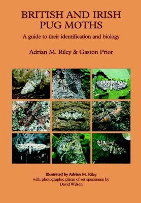 British and Irish Pug Moths: A Guide to their Identification and Biology