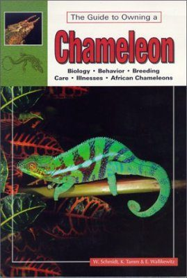 The Guide to Owning a Chameleon