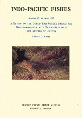 A Review of the Gobiid Fish Genera Exyrias and Macrodontogobius, with Description of a New Species of Exyrias