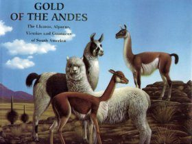 Gold of the Andes: The Llamas, Alpacas, Vicunas and Guanacos of South America (2-Volume Set)
