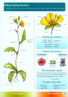 Describing Flowers