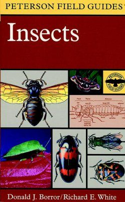 Peterson Field Guide to the Insects of America North of Mexico