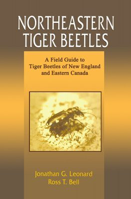 Northeastern Tiger Beetles