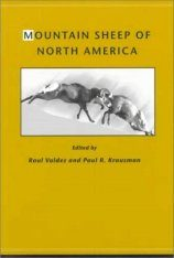 Mountain Sheep of North America