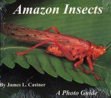 Amazon Insects