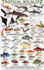 Tropical Wildlife Field Guide: Pacific Coast Reef Fish [English / Spanish]
