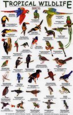 Tropical Wildlife Field Guide: Birds [English / Spanish]
