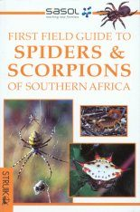 Spiders and Scorpions of Southern Africa Image
