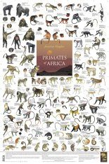 Primates of Africa - Poster