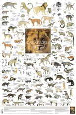 Carnivores of Africa - Poster