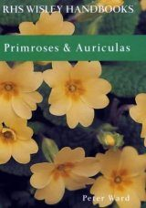 Primroses and Auriculars Image