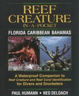 Reef Creature In-A-Pocket: Florida, Caribbean, Bahamas Image