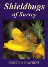 Shieldbugs of Surrey