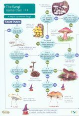 The Fungi Name-Trail