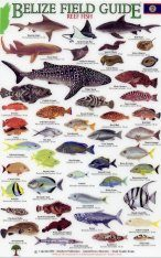 Belize Field Guides: Reef Fish Image