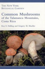 Common Mushrooms of the Talamanca Mountains, Costa Rica