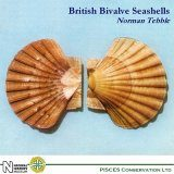 British Bivalve Seashells