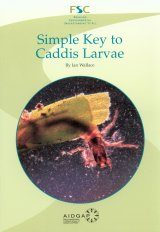 Simple Key to Caddis Larvae