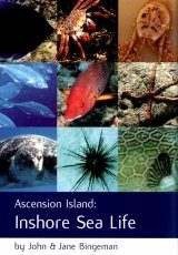 Ascension Island: Inshore Sea Life