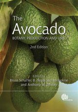 The Avocado