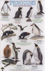 Penguins From Around the World