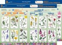 Guide to Flowers of the Hedgerow