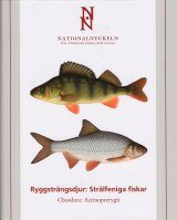 The Encyclopedia of the Swedish Flora and Fauna, Ryggsträngsdjur: Strålfeniga Fiskar [Swedish] Image