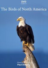 DVD Guide to the Birds of North America (2DVD, All Regions)