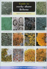 Guide to Rocky Shore Lichens