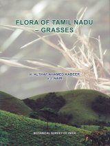 Flora of Tamil Nadu - Grasses