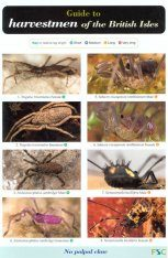 Guide to Harvestmen of the British Isles