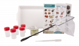 Educational Rock Pooling Kit