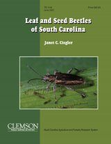 Leaf and Seed Beetles of South Carolina Image
